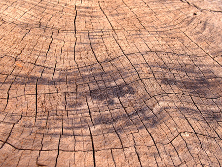 old rough brown timber surface with darker scorch marks and cracks following the growth rings Stock Photo