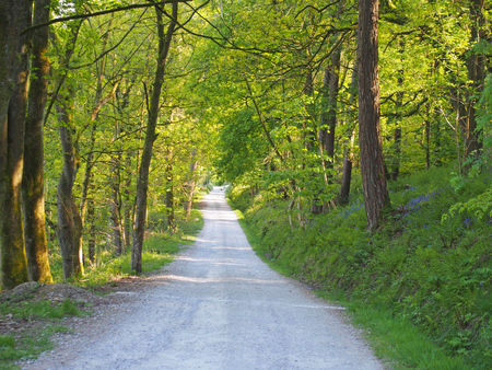 a perspective view a narrow country lane running though bright sunlit spring woodland with a surrounding canopy of forest trees