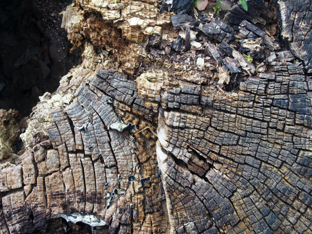 old cracked decaying timber surface with tree rings and lines in a geometric concentric pattern Archivio Fotografico