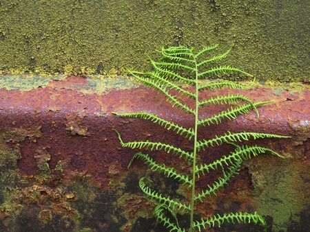 a close up of an old rusty steel surface covered in green moss and algae with a fern growing against if