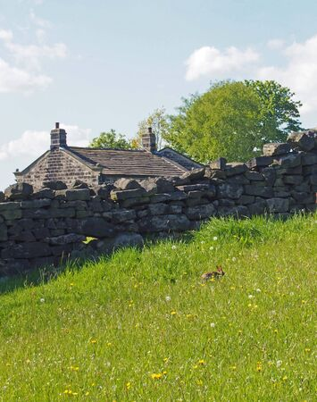 a stone wall in front of the roof of an old farmhouse with a small rabbit in a meadow of tall grass and string flowers