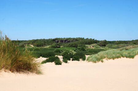 the beach at formby merseyside with dunes covered in marram grass and vegetation with forest landscape in the distance on a bright summer day 写真素材