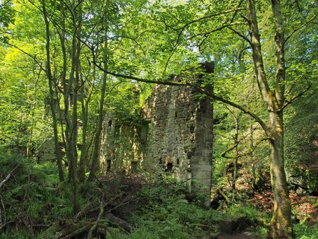 a ruined ancient stone building surrounded by green forest trees in bright sunlight originally called staups mill in west yorkshire Stockfoto