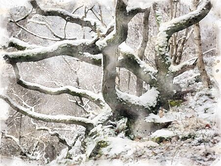 watercolor painting of snow covering twisted winter trees and branches in a hillside forest with rocky ground