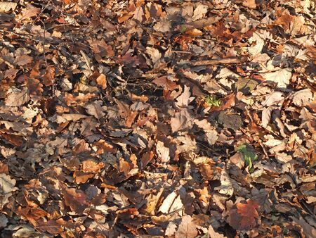 mixed brown fallen leaves on a forest floor in winter sunlight and shadow