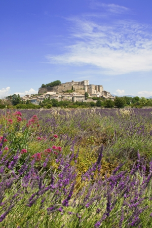 Landscape in Provence  South France