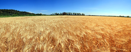 France - cereal 免版税图像