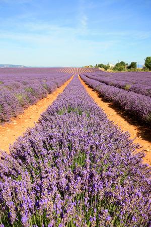 provence: Provence Stock Photo
