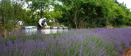 apiarist: Beekeeper