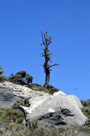 dales: A dead tree on top of a rocky hill. Stock Photo