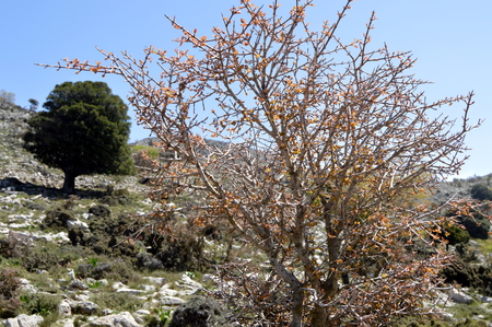 A shrub in the mountains on a hill in Crate.