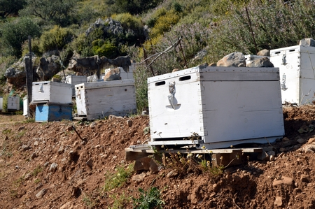 hives: Hives of bees in mountain of Crete.