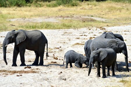 Herd of elephants in search of water in a park in Tanzania
