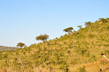 Wooded hill in the savanna of Tsavo West Park in Kenya Stock Photo