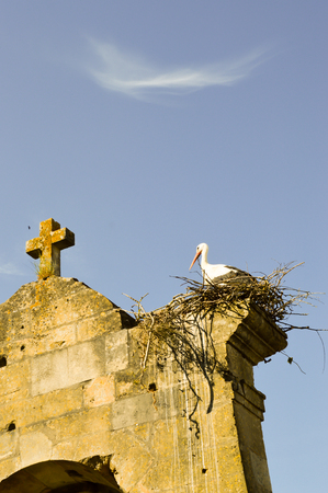 Stork in its nest perched on the portico of the church of Saint-Maurice in Damvillers in the north of France