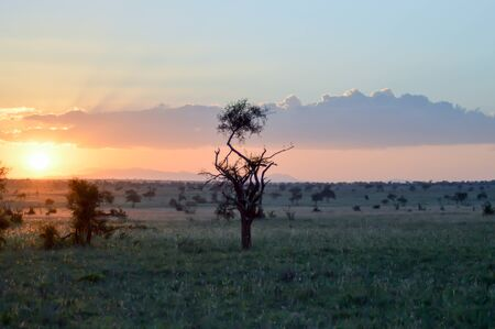 Sunset over the savanna of Tsavo West Park in Kenya Stock Photo - 82307557