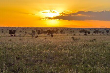 Sunset over the savanna of Tsavo West Park in Kenya