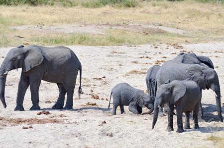 Herd of elephants looking for a waterhole in the Tarangire Park in Tanzania