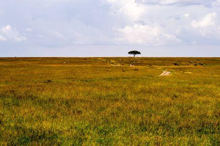 View of the savannah in Maasai Mara Park Kenya