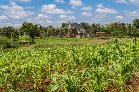 Residential house in nature near the city of Thika in Kenya with a field of corn in the foreground