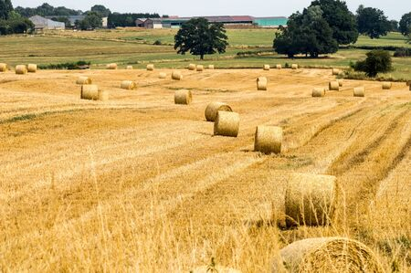 Fields of haystacks in the countryside of Gérouville near Virton in the province of Luxembourg in Belgium.Europe