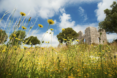 The ruins of a Byzantine church overgrown with daisies on the north coast of the Greek island of Kefalonia. Art filters and shallow depth of field have been added to create a dreamy soft focus effect.