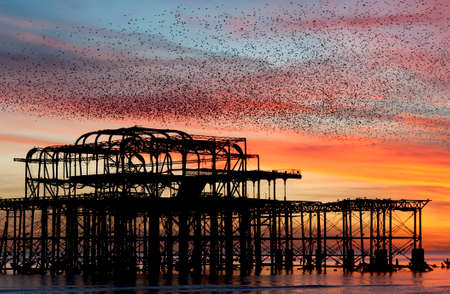 Murmuration over the ruins of Brightons West Pier on the south coast of England. A flock of starlings swoops in a unified mass over the pier at sunset