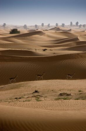 as far as the eye can see: A view from the top of sand dunes as far as the eye can see Stock Photo