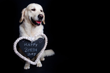 Golden Retriever Wishes Happy Birthday Stock Photo Picture And