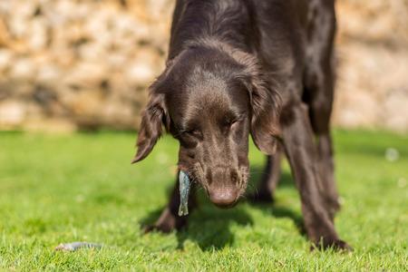 Hund frisst einen kleinen Hering Standard-Bild - 40277493