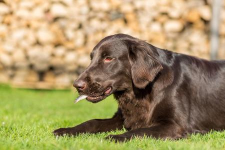 Hund frisst einen kleinen Hering Standard-Bild - 40277537
