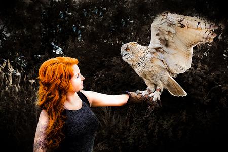 Wonderful eagle hawk with a model