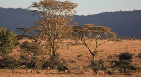 paysage: SAFARI EN MONTGOLFIERE SERENGETI PARK TANZANIE - SAFARI SERENGETI PARK BALLOONING