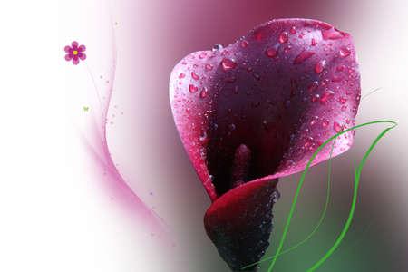 lila: Blumen