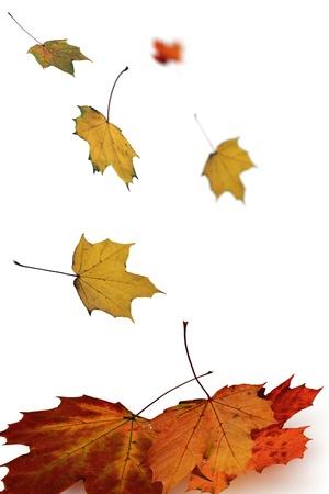 gold en: Herbst