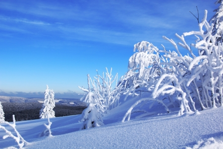 tannenbaum: Winter1 Stock Photo