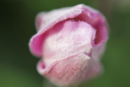 frhling: Blume in Makrofotografie