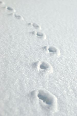 Small animal tracks in the snow