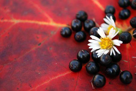 Close up detail of an Autumn foliage arrangement