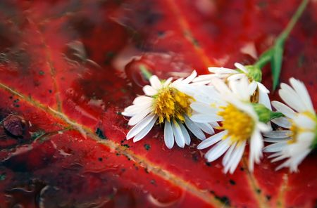 Closeup detail of autumn leaves and flowers covered in water