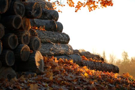 Stack of chopped logs covered in fallen leaves and early morning sunlight