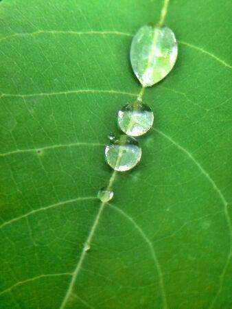 gotas de agua: Gotas de lluvia sobre una hoja