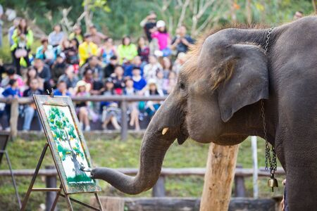 big5: Elephant painting on paper in elephant show in Thailand