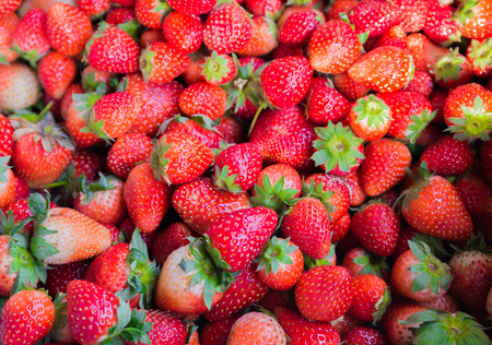 riped: Fresh riped strawberry for Food farm background