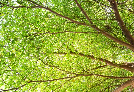 sylvan: Green leaves on tree branch with bird nest Stock Photo