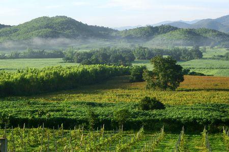 Vineyard in Kanchanaburi  Stock Photo - 7281223