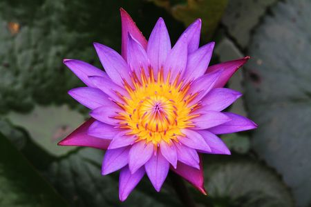 In large lotus pond.