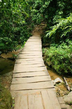 wooden bridge in the jungle Stock Photo - 7346085