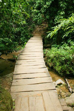 wooden bridge in the jungle Stock Photo - 7346085