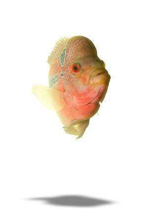 diskus: fish